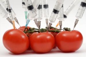Científicos Europeos confirman gravedad de los cultivos transgénicos.