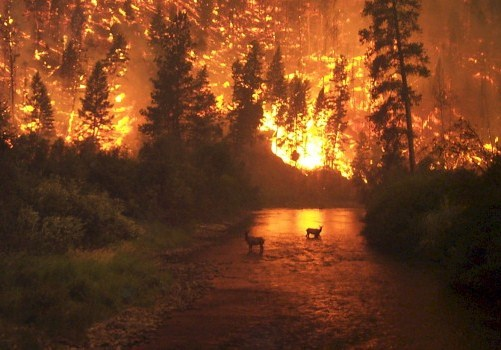 Incendios-forestales-660x350