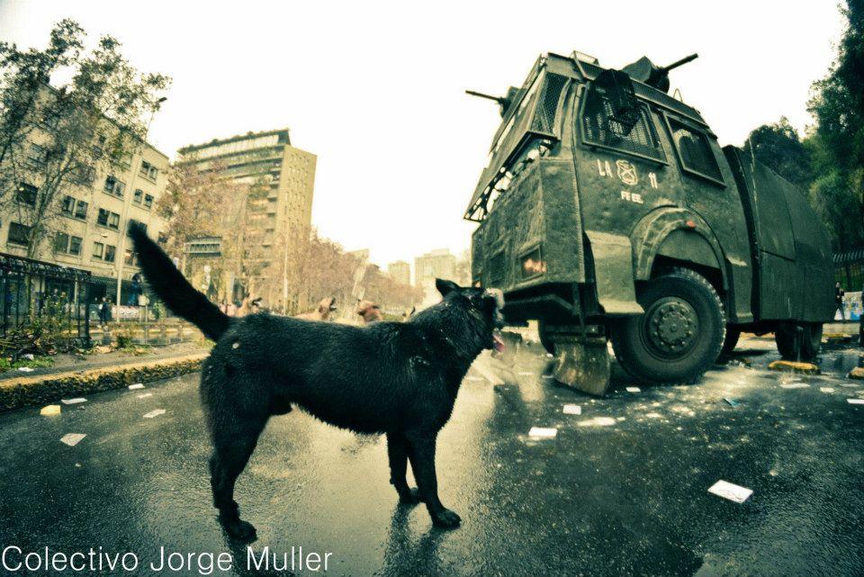 Conoce al perro protestante de Chile