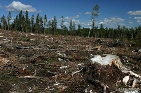 desforestacion chile