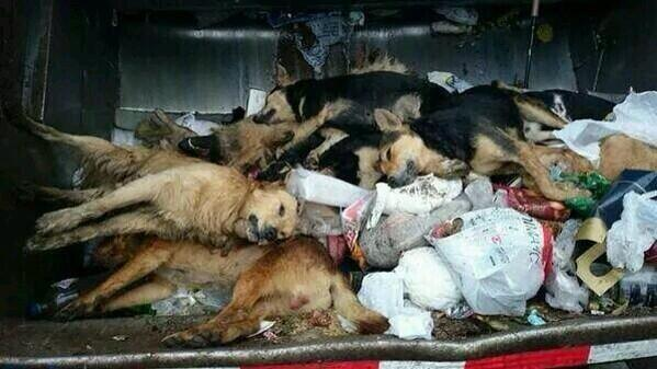 ... que permite matar perros a 400 metros de cualquier zona urbana   GAMBA
