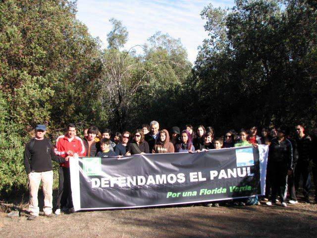 Bosque Panul Cuando El Capitalismo Arrasa Con Todo
