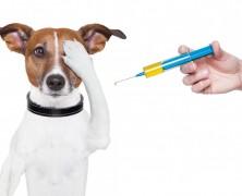 Merecemos Ébola: Funcionarios del SAG fueron vacunados con medicamento para animales