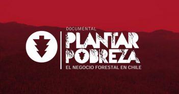 plantar pobreza