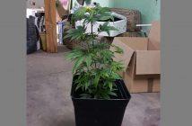 planta pacos culiaos1