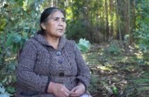 documental mapuche forestales 1