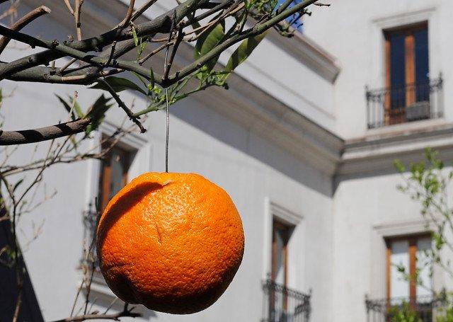 naranjas alambres piñera
