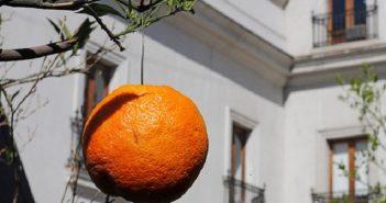 naranjas alambres piñeral